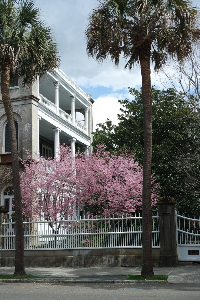 House on Meeting Street with cherry trees, Charleston SC