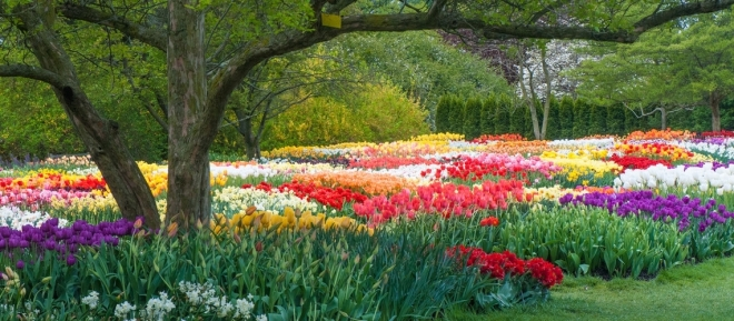 Tulips and other spring bulbs in bloom at Longwood Gardens, Pennsylvania