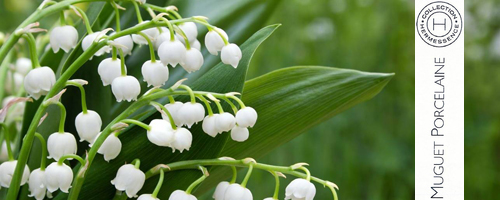 Flowers of lily of the valley, Hermes Muguet Porcelaine by Jean Claude Ellena