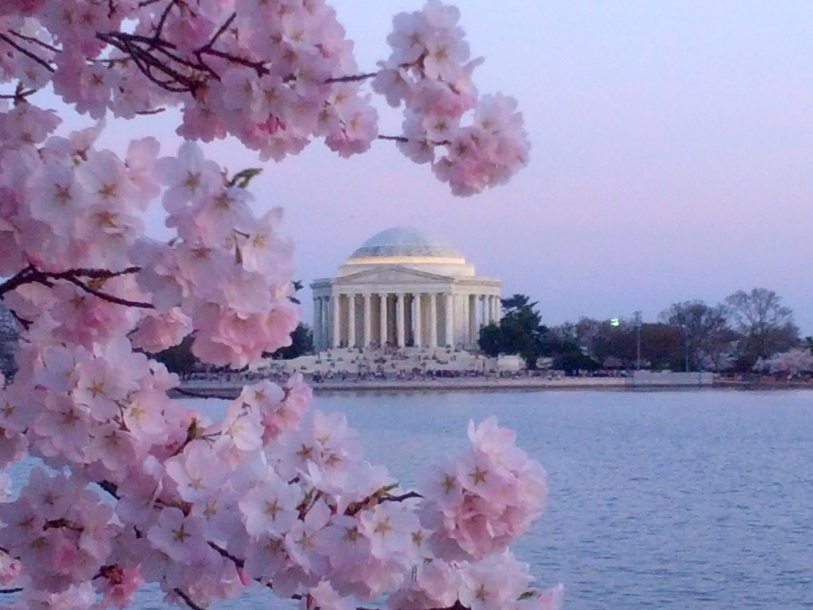 Blossoming cherry trees and the Jefferson Memorial at the Tidal Basin in Washington, DC