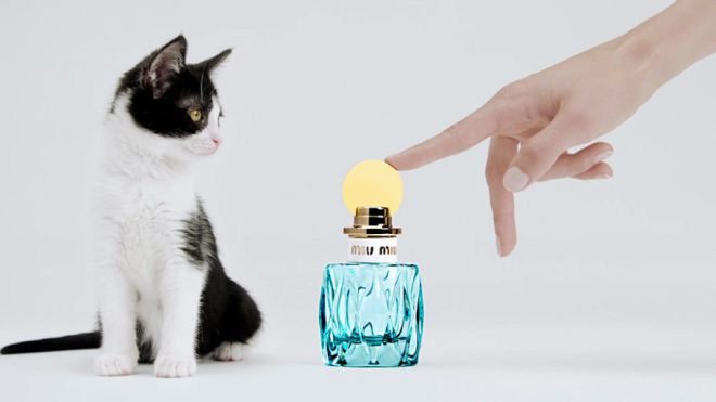 Fragrance ad for Miu Miu L'Eau Bleue, with bottle and kitten
