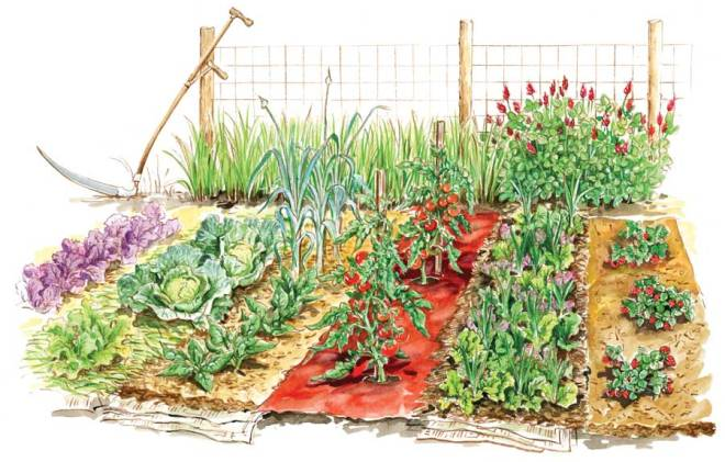 Illustration of vegetable garden
