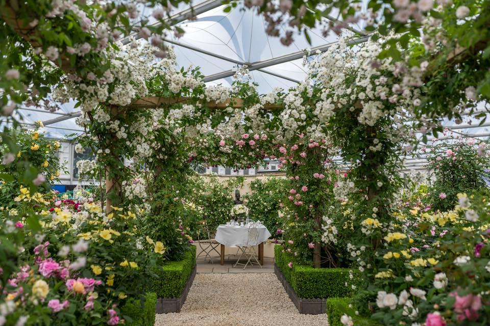 David Austin Roses display at RHS Chelsea Flower Show, 2018