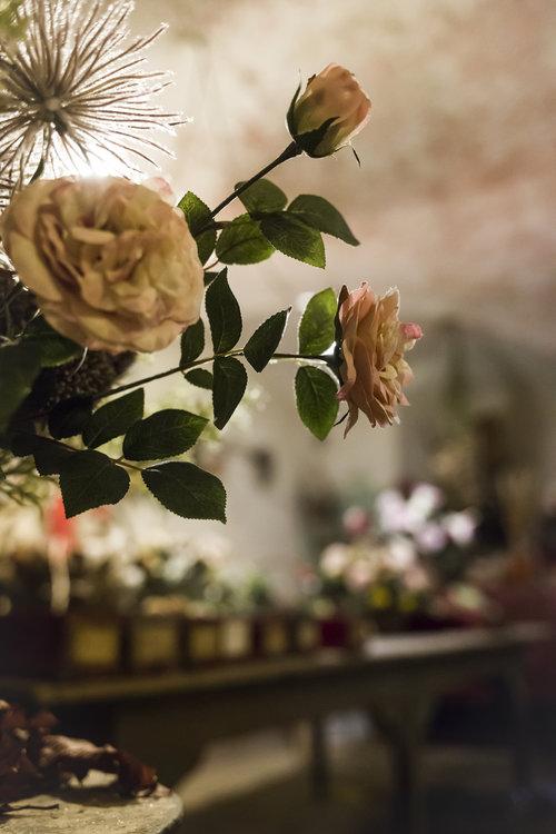 Roses de Mai Marathon:Rosae