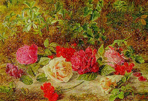 Roses de Mai Marathon: GeraniumBourbon