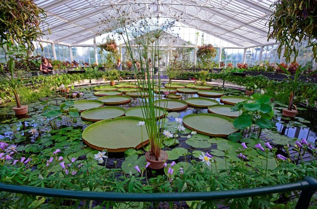 Glass house with giant waterlilies at Kew Royal Botanic Gardens